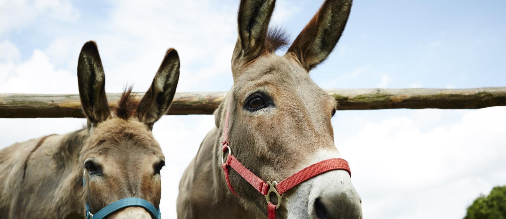Unsere Esel und andere Tiere warten auf Euch!